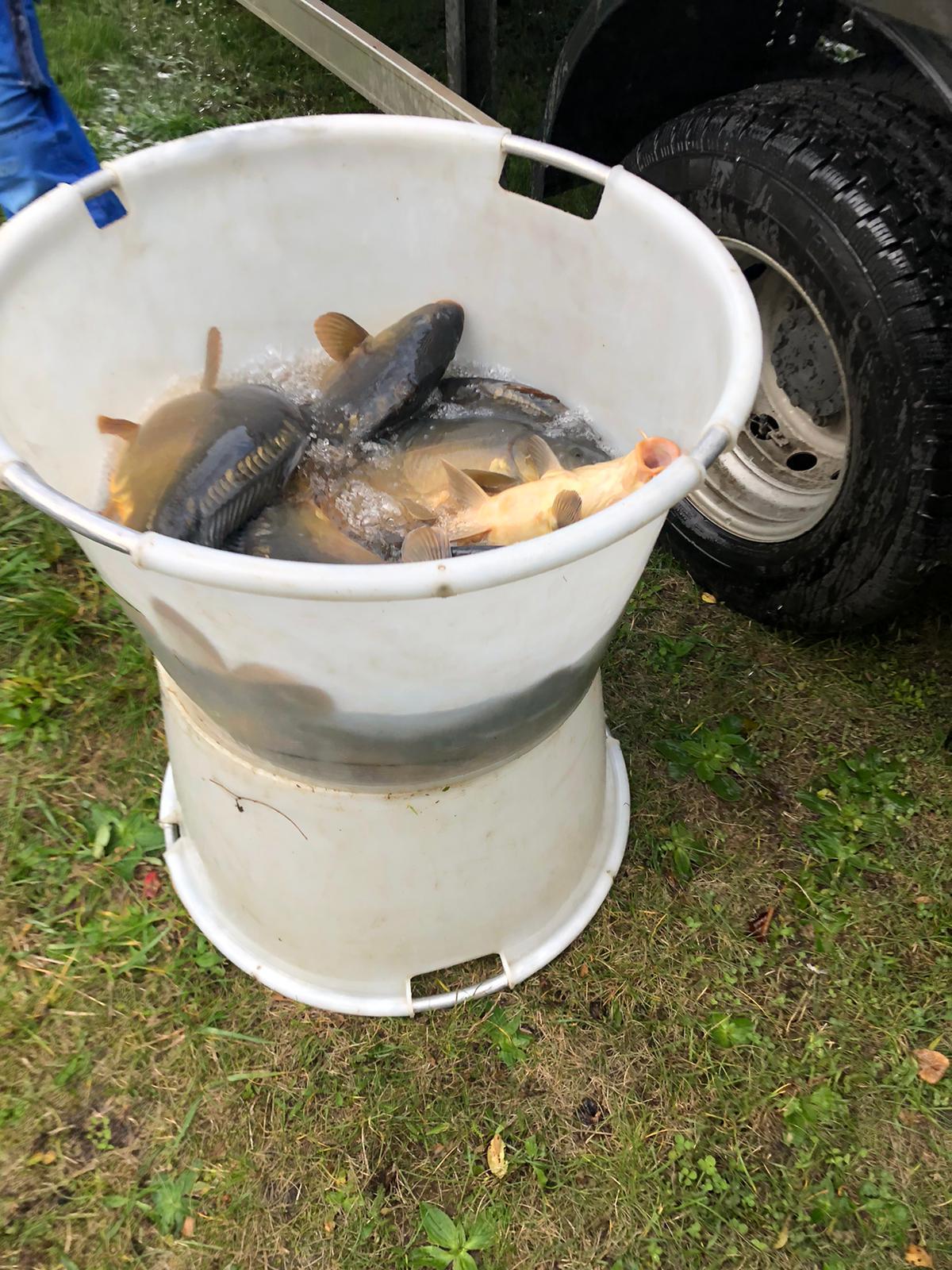 Fischbesatz am 19.10.2020